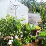 Greenhouse maintenance services - Cab Baber - Big Island Hawaii Organic
