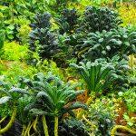 Cab - Clarence Baber - Organic Vegan Farming Hawaii
